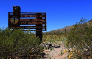 Argentinas-National-Cardones-Cactus-Park-Salta-Province